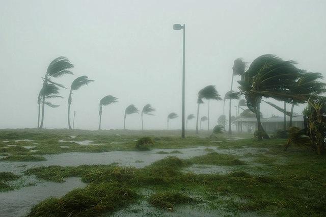 Pet Disaster Tip #23 – Hurricanes