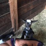 """""""It's hard to get a selfie with a baby goat"""""""