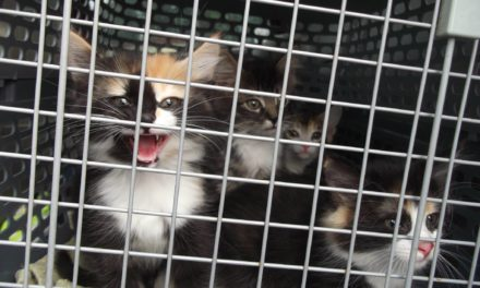 Goodbye Kitties to your new lives